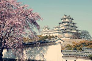 Kirschblütenzeit am Himeji Castle